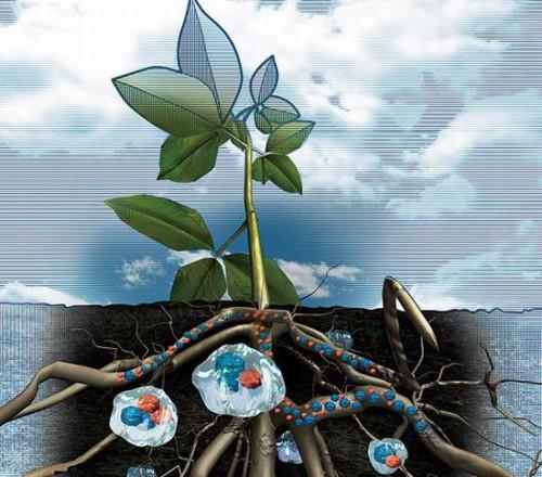 Гидрогель для растений - что такое гидрогель (2)