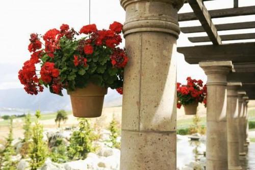 Гидрогель для растений - что такое гидрогель (3)