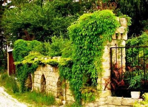 Живая изгородь на даче - растения для живой изгороди (14)