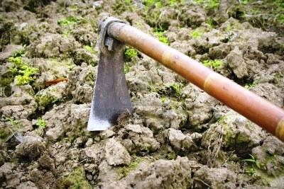 Борьба с сорняками - избавиться от сорняков (1)