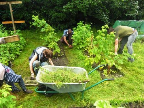 Борьба с сорняками - избавиться от сорняков (2)