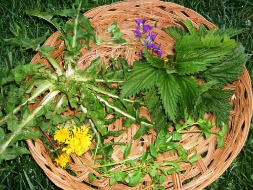 Борьба с сорняками - избавиться от сорняков (5)