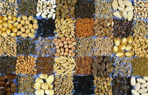 Как выбрать семена - семена для посадки (1)