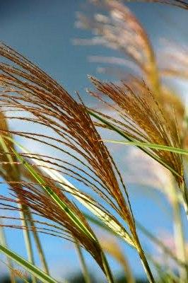 Фитонциды растений - защита сада (13)