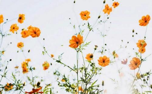 Мавританский газон - как ухаживать за газоном (6)