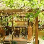 Вертикальное озеленение сада - озеленение территории (2)