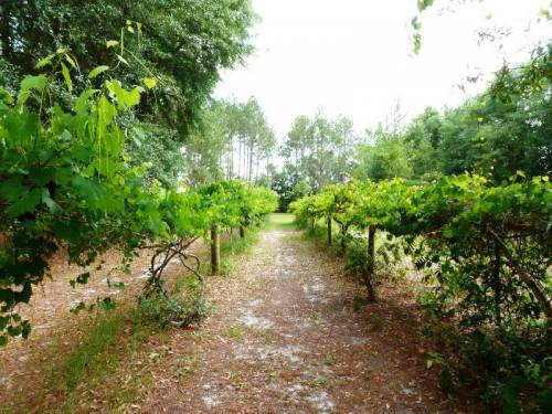 Вертикальное озеленение сада - озеленение территории (4)