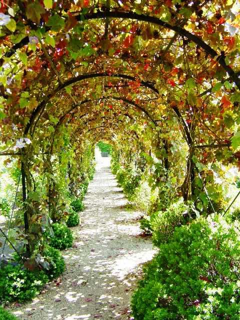 Вертикальное озеленение сада - озеленение территории (8)