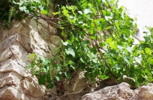 Вертикальное озеленение сада - озеленение территории (10)