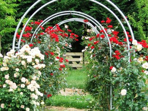 Вертикальное озеленение сада - озеленение территории (13)