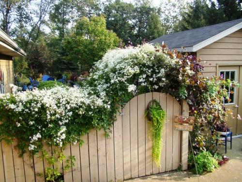 Вертикальное озеленение сада - озеленение территории (15)