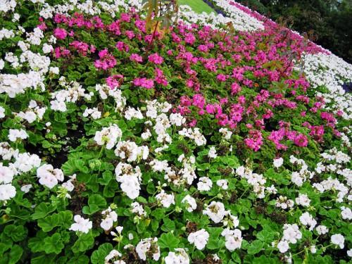 Оформление цветника - цветник на даче своими руками (4)