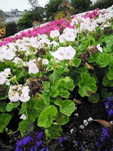Оформление цветника - цветник на даче своими руками (5)