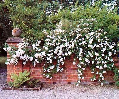 Палисадник своими руками - фото как украсить сад  (8)