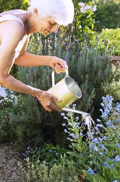 Полив овощей - полив цветов (1)