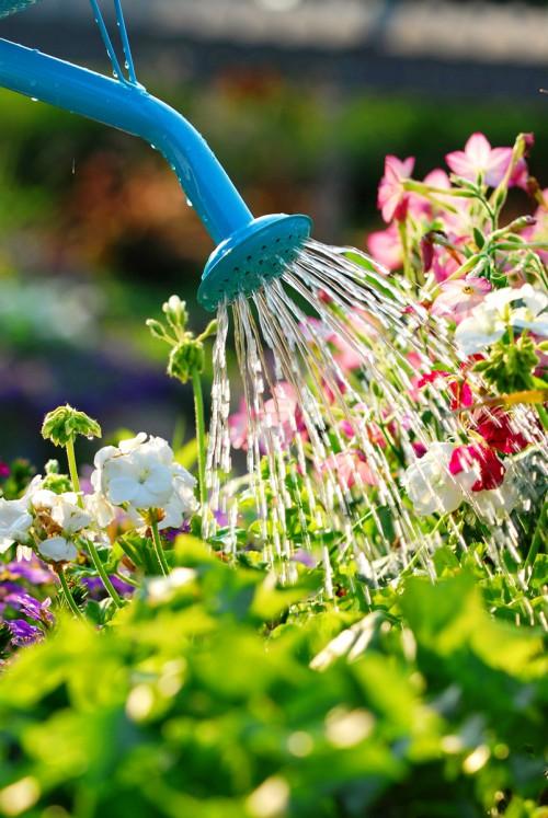 Полив овощей - полив цветов (2)