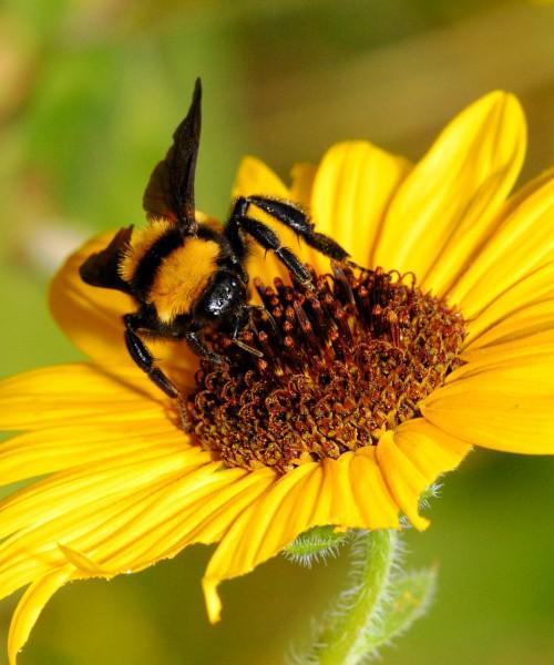 Пчеловодство для чайников - как заниматься пчеловодством (4)