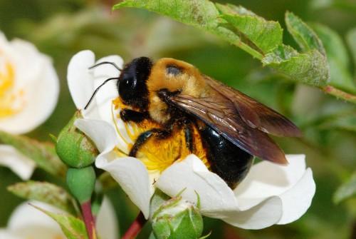 Пчеловодство для чайников - как заниматься пчеловодством (5)