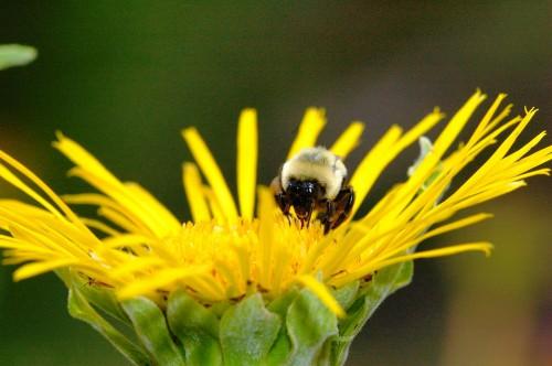 Пчеловодство для чайников - как заниматься пчеловодством (9)