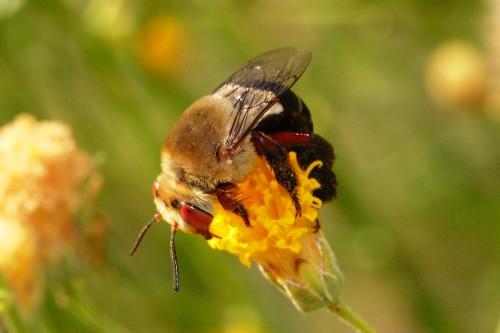 Пчеловодство для чайников - как заниматься пчеловодством (10)