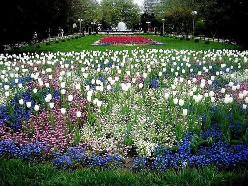 Рабатка - фото цветников (2)