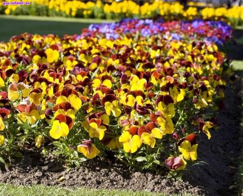 Рабатка - фото цветников (3)
