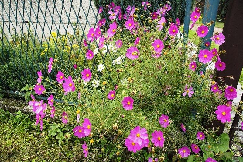 Рабатка — фото цветников | Дача своими руками