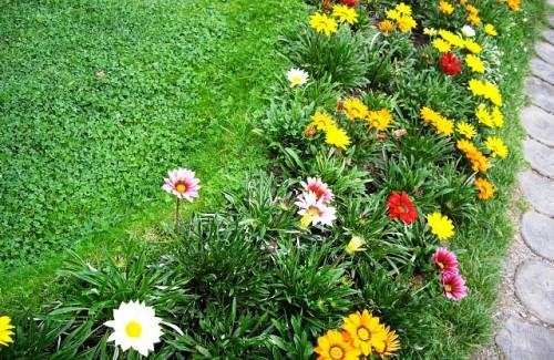 Рабатка - фото цветников (8)