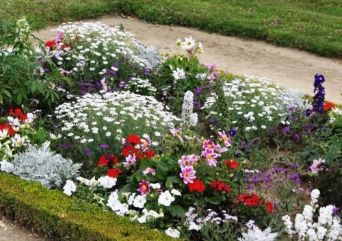 Рабатка - фото цветников (10)