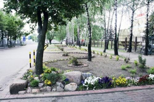Рабатка - фото цветников (11)