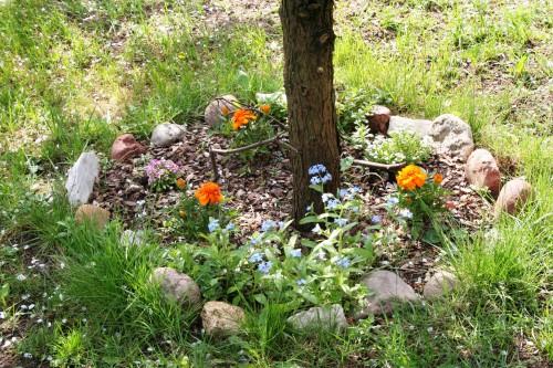 Рабатка - фото цветников (12)