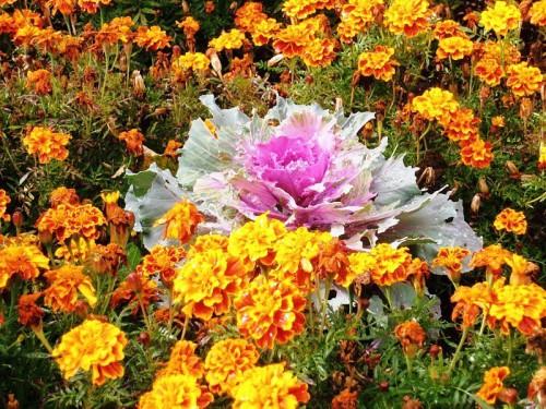 Рабатка - фото цветников (14)
