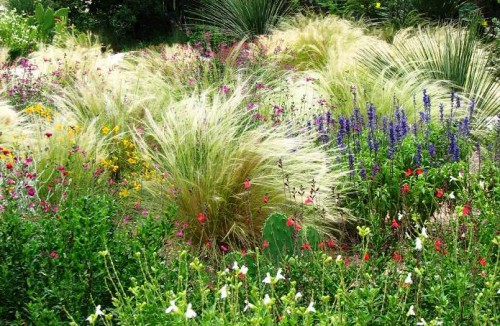 Фитонциды растений - защита сада (8)