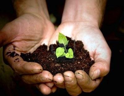 Состав почвы - определение PH почвы (2)