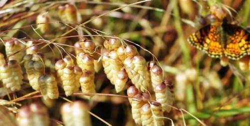 Фитонциды растений - защита сада (12)