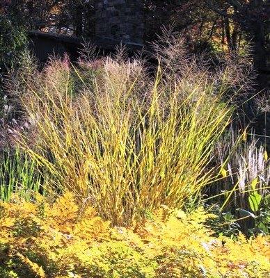 Фитонциды растений - защита сада (9)