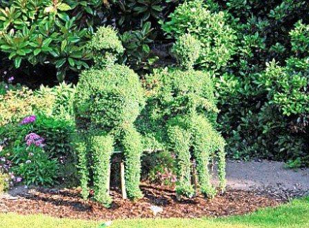 Топиарное искусство - виды растений и фото (33)