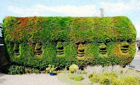 Топиарное искусство - виды растений и фото (34)