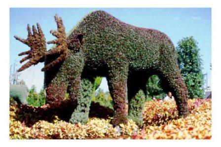 Топиарное искусство - виды растений и фото (37)