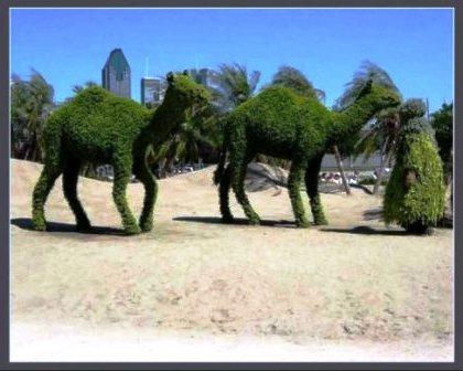 Топиарное искусство - виды растений и фото (38)