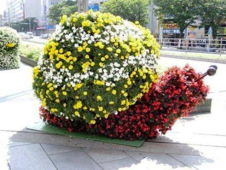 Топиарное искусство - виды растений и фото (39)