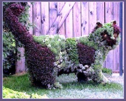 Топиарное искусство - виды растений и фото (40)