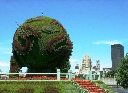 Топиарное искусство - виды растений и фото (41)
