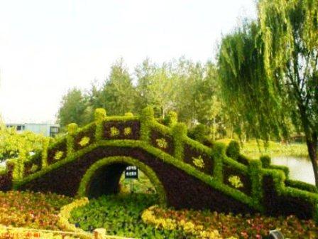 Топиарное искусство - виды растений и фото (43)