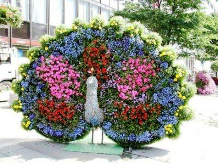 Топиарное искусство - виды растений и фото (50)