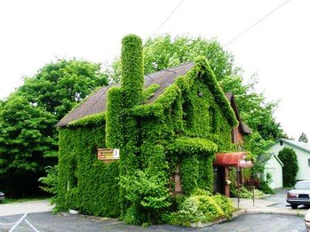 Топиарное искусство - виды растений и фото (51)
