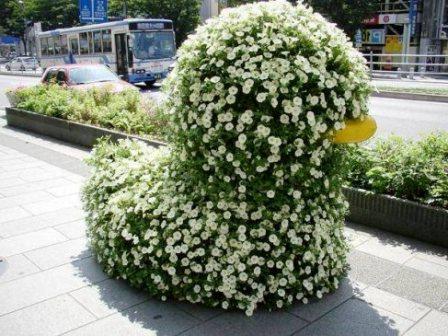 Топиарное искусство - виды растений и фото (52)