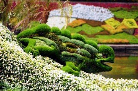 Топиарное искусство - виды растений и фото (54)