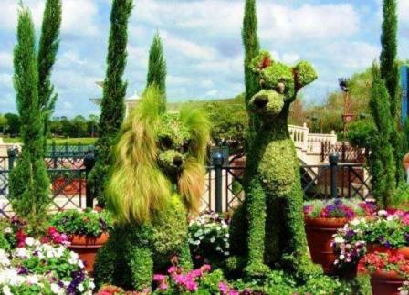 Топиарное искусство - виды растений и фото (56)