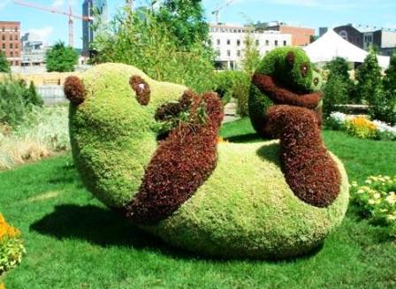 Топиарное искусство - виды растений и фото (57)